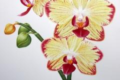 Orchidee_foto_klein